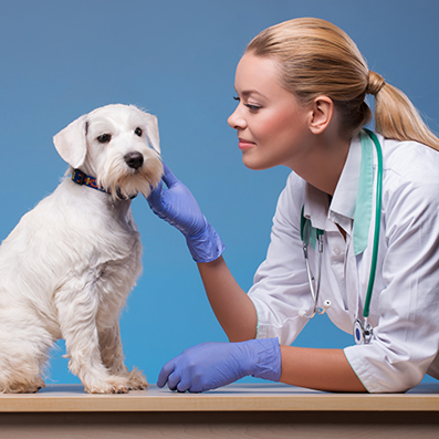 pet care products in india